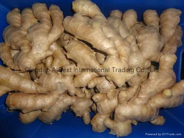 Chinese Fresh Ginger 17