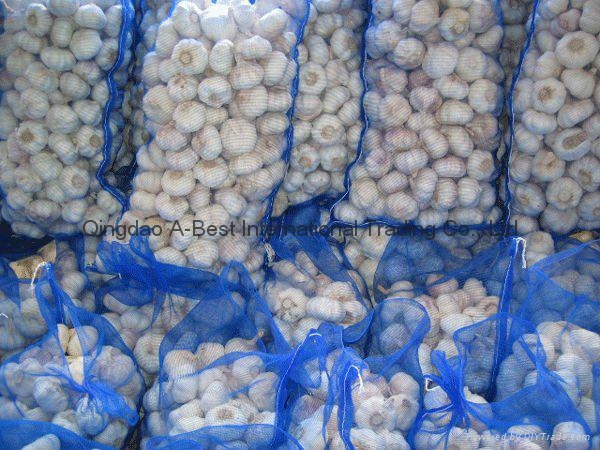 Organic PURE WHITE Fresh Garlic 5