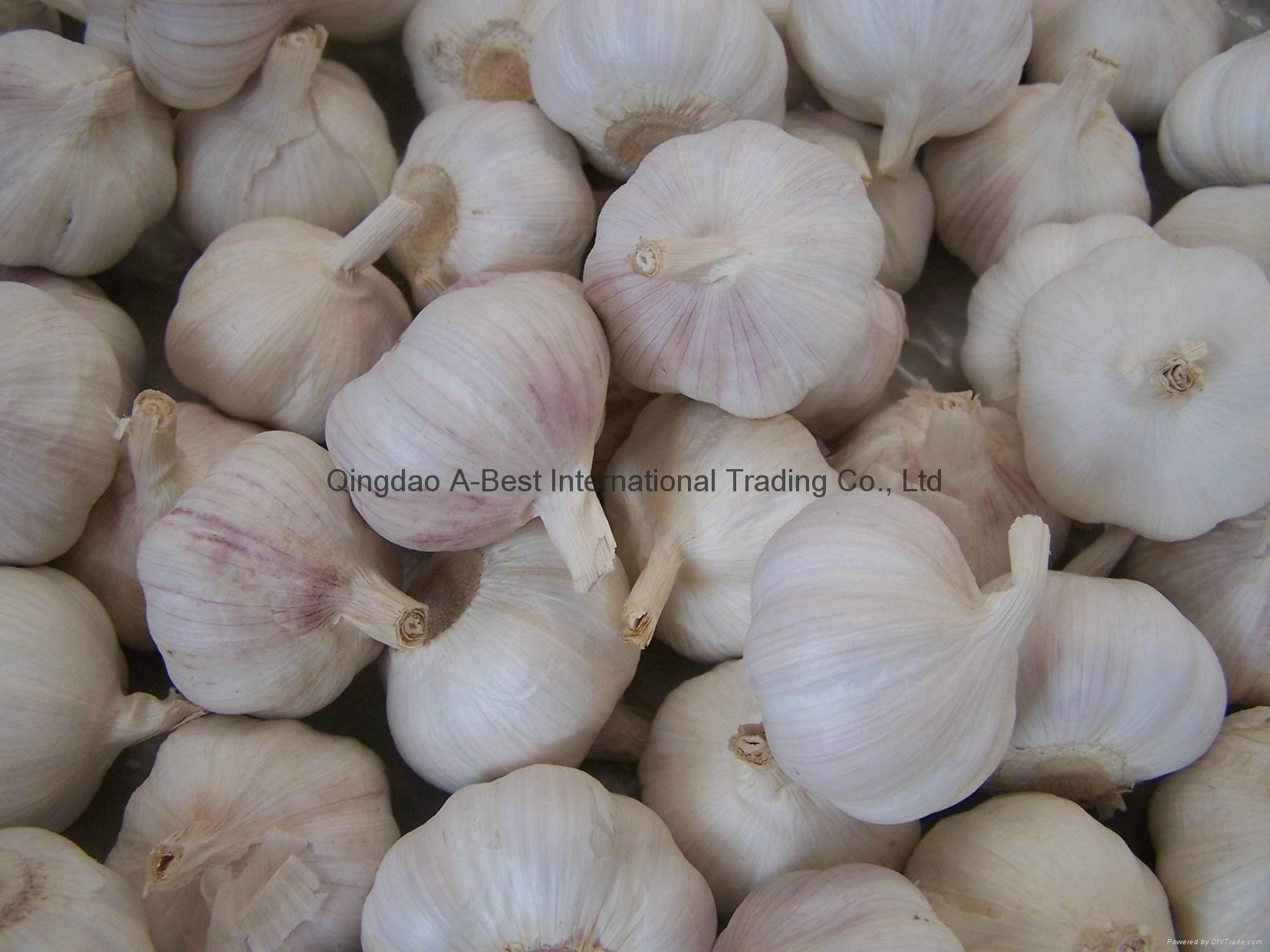 Organic PURE WHITE Fresh Garlic 8