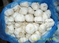 Organic PURE WHITE Fresh Garlic 2