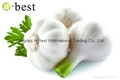FRESH DER KNOBLAUCH,PURE WHITE GARLIC