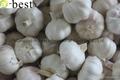 Allium sativum,PURE WHITE 18