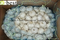 2015 new  PURE WHITE Fresh Garlic 10