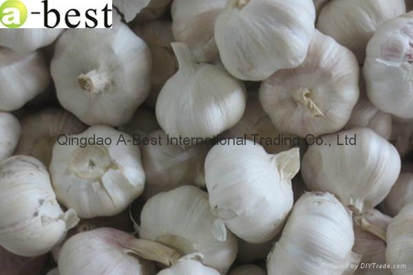 2015 new  PURE WHITE Fresh Garlic 14