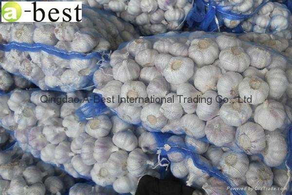 2015 new  PURE WHITE Fresh Garlic 20