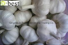 2017 Chinese new crops Fresh Garlic,NORMAL WHITE