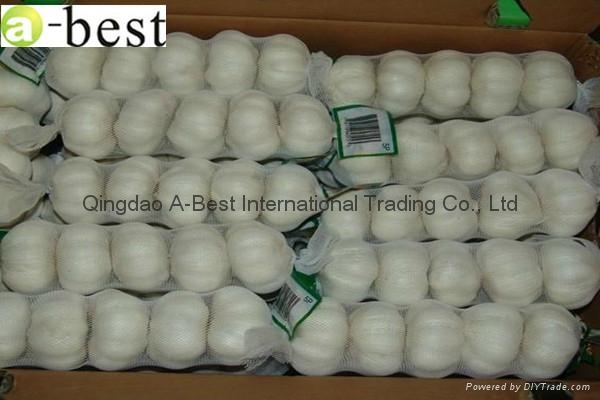 2017 Chinese new crops Fresh Garlic,NORMAL WHITE 8