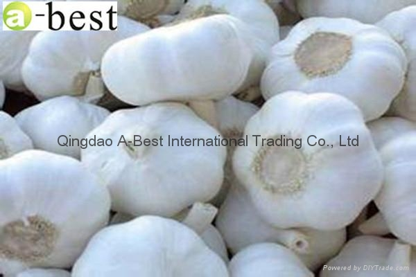 2017 Chinese new crops Fresh Garlic,NORMAL WHITE 12