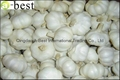 2017 Chinese new crops Fresh Garlic,NORMAL WHITE 15