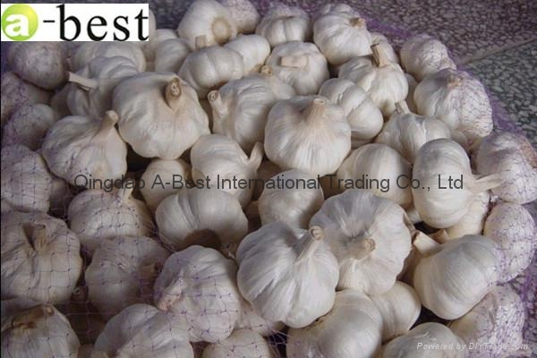 2017 Chinese new crops Fresh Garlic,NORMAL WHITE 16