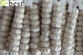 2017 Chinese new crops Fresh Garlic,NORMAL WHITE 19