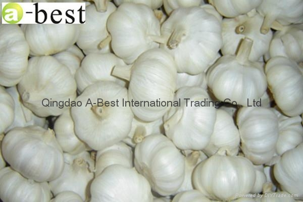 Chinese new crops Fresh Garlic 1