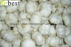 Chinese new crops Fresh Garlic