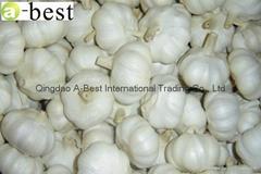Chinese new crops Fresh Garlic