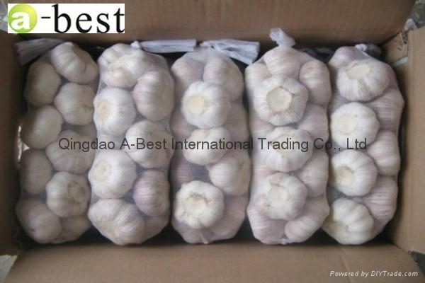 Chinese new crops Fresh Garlic 2