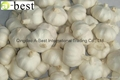 Chinese new crops Fresh Garlic 5