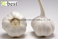 Chinese new crops Fresh Garlic 9