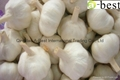 Chinese new crops Fresh Garlic 14