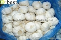 Chinese new crops Fresh Garlic 19
