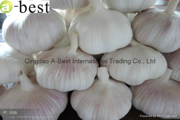 Fresh Garlic 1