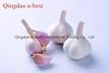 Fresh Garlic 3
