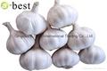 Fresh Garlic 4