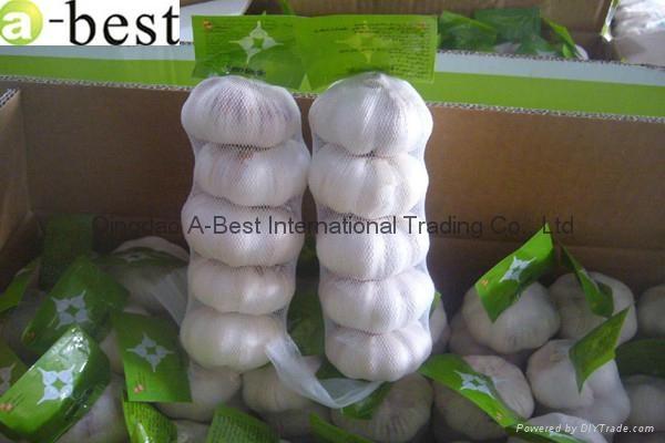 Fresh Garlic 5