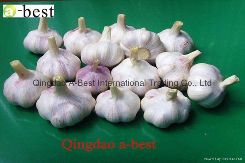 Fresh Garlic 6