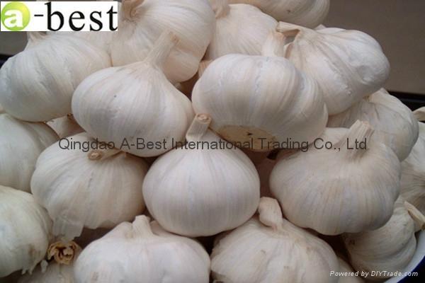 Fresh Garlic 8