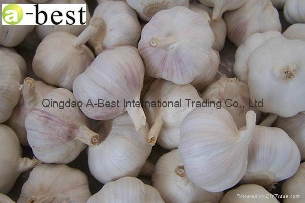 Fresh Garlic 10