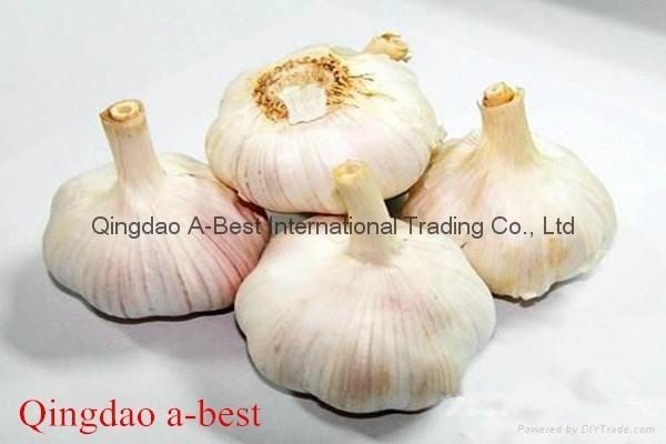 Fresh Garlic 11