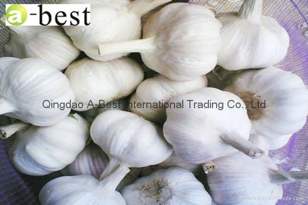 Fresh Garlic 13