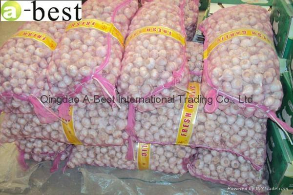 Fresh Garlic 17