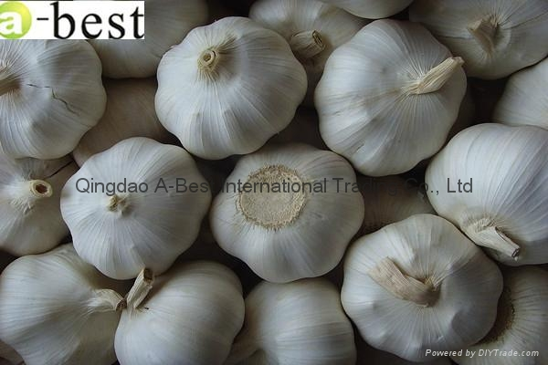 Organic PURE WHITE Fresh Garlic 12