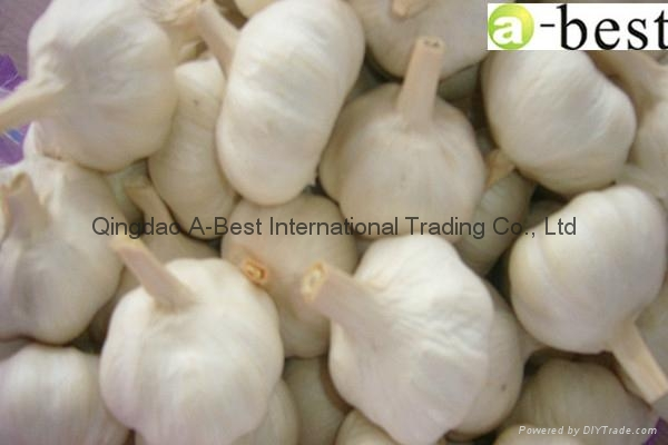 Organic PURE WHITE Fresh Garlic 15