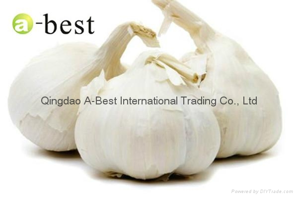 Organic PURE WHITE Fresh Garlic 18