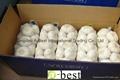 Chinese PURE WHITE Fresh Garlic 1