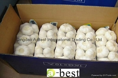 Chinese PURE WHITE Fresh Garlic
