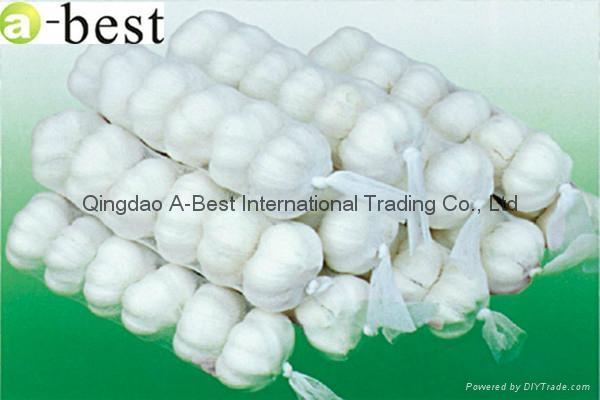 Chinese PURE WHITE Fresh Garlic 3