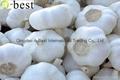 Chinese PURE WHITE Fresh Garlic 4