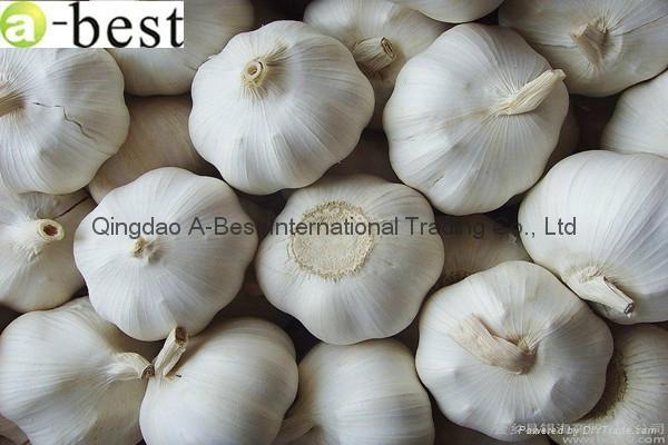 Chinese PURE WHITE Fresh Garlic 7