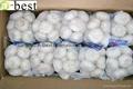 Chinese PURE WHITE Fresh Garlic 6