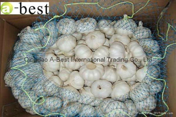 Chinese PURE WHITE Fresh Garlic 8