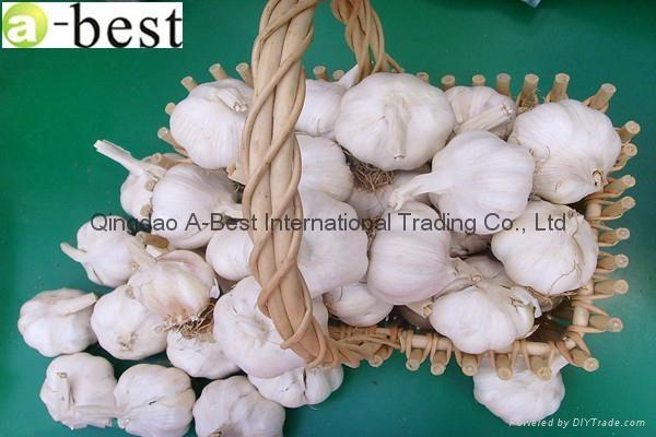 Chinese PURE WHITE Fresh Garlic 9