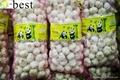 Chinese PURE WHITE Fresh Garlic 10