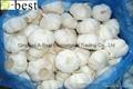Chinese PURE WHITE Fresh Garlic 11