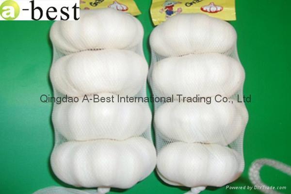 Chinese PURE WHITE Fresh Garlic 13