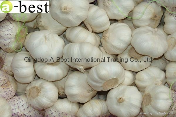 Chinese PURE WHITE Fresh Garlic 12