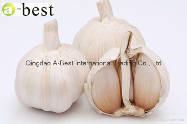 Fresh Garlic 14