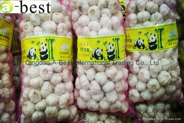 Fresh Garlic 20